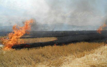 Cinci hectare de miriște s-au făcut scrum la Ștefan Vodă