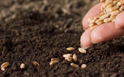 Semințele și pesticidele s-au ieftinit de la 1 august 2016/Cum se aplică TVA de 9% pentru inputuri și prestări de servicii