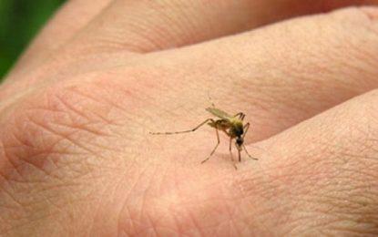 DSP Călărași: Atenționări privind infecția cu virusul West Nile