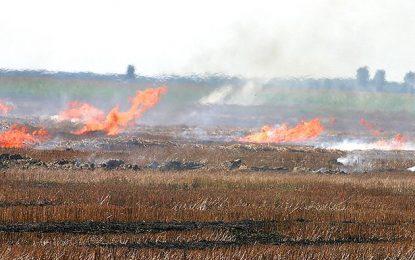 50 de hectare de miriște s-au făcut scrum la Dragoș Vodă
