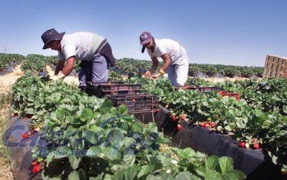 EURES România organizează selecții pentru recrutarea a 800 de lucrători în domeniul agricol