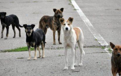 Călărășenii vor putea semnala prezența câinilor fără stăpân printr-o aplicație instalată pe telefon