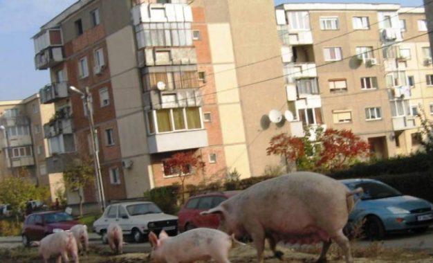"""Alexandru Drăgulin, directorul SPGCFS Călărași:""""Cetățenii care nu vor mai putea ține în locuință sau gospodărie orice animal îl poate încredința serviciului nostru"""""""