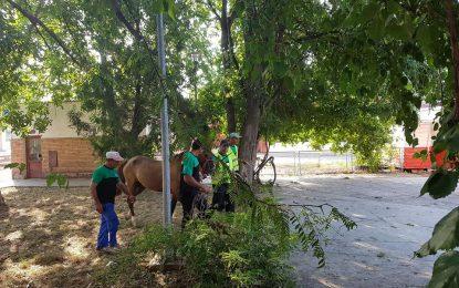Călărași/Cai ridicați de pe domeniul public de angajații Serviciului Public pentru Gestionarea Câinilor fără Stăpân
