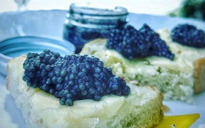 Afacere de familie cu gust de caviar/Fermă piscicolă de sturioni la Borcea