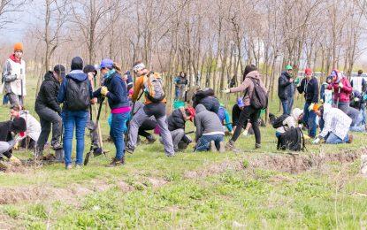 Adoptă un copac în județul Călărași/Proiect pilot de înființare a Perdelelor Forestiere