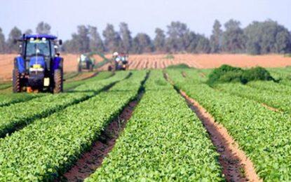 AFIR/Gradul de absorbție din fondurile europene pentru agricultură și dezvoltare rurală a ajuns la 80%