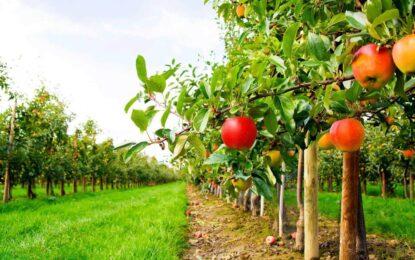 AFIR a publicat condițiile de accesare a fondurilor europene pentru tineri fermieri, ferme mici și pentru cooperare în sectorul agricol și pomicol