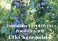 Prune de Topoloveni/ 1,3 lei/kg negociabil