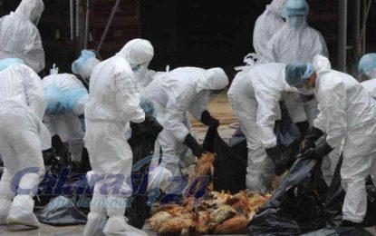 Directia de Sănătate Publică Călărasi/Comunicat de presă privind gripa aviară