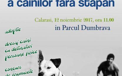 TÂRG DE ADOPȚII canine, la Călărași/Prietenii tăi patrupezi te așteaptă să îi iei acasă