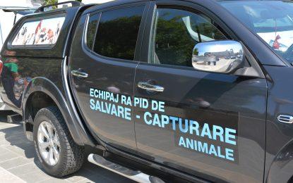 Călărășean, amendat cu 600 de lei pentru agresarea fizică și verbală a lucrătorilor Serviciului Public pentru Gestionarea Câinilor fără Stăpân